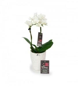 Orchidée mini