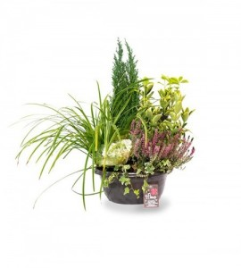 Coupe horticole