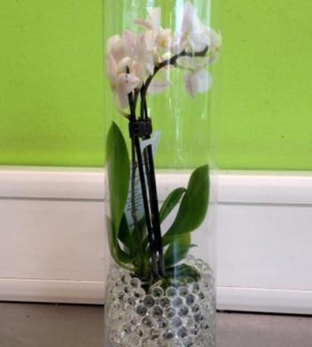 Mini orchidées dans billes d'eau