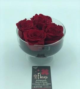 Roses éternelles eclat