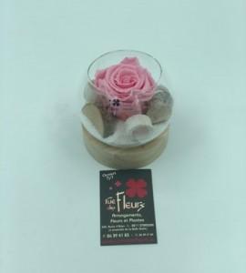 Roses éternelles 5