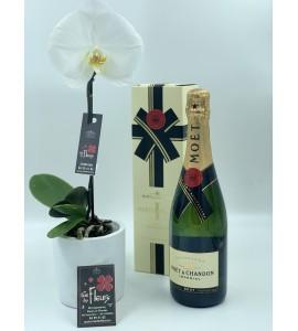 Orchidée Singolo et Champagne