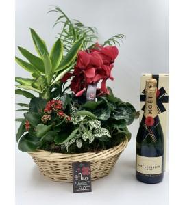 Panier de Plantes et Champagne
