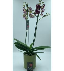 Orchidée et Champagne